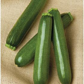 Skillnad på Zucchini och Squash